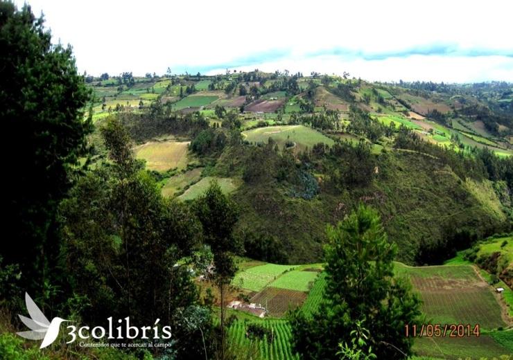 Potosí p.1 3colibris