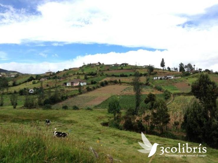 Potosí p.2 3colibris.jpg