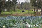 Agricultura biointensiva en una chinampa en el corazón de la Cuidad de Mexico. Fuente: 3Colibrís.