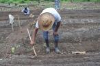 Los estudiantes del Instituto Superior Indígena Ayuuk en el estado de Oaxaca realizan una minga para acompañar la siembra de campesinos e indígenas de la región Mixe. Fuente: 3Colibrís.