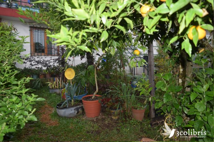 Jalapa huerta urbana 11.png