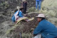 La agricultura campesina también tiene rostro de mujer, cosecha de papa de 4000 msnm. Fuente: 3Colibrís.