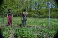 En the Fellowship Community los jóvenes se involucran en la agricultura a través de la educación Waldorf. Fuente: 3Colibrís.