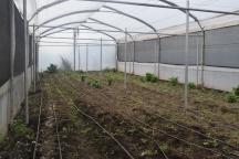 Este es el invernadero en que la asociación Argelia Alta cultiva hortalizas orgánicas. Fuente: 3Colibrís.