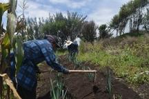 En el corazón de Quito la asociación Argelia Alta liderada por mujeres que levantan una huerta urbana para alimentar sano a los quiteños. Fuente: 3Colibrís.