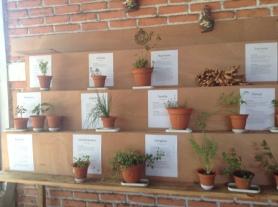 Un museo vivo en el restaurante agroecológico Gualca. Fuente: 3Colibrís.