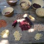 Somos diversos como el maíz. Fuente: 3Colibrís.