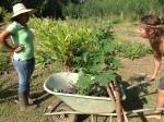 Trabajo en la huerta en la Finca Loroco, a sus 23 años Layli lideraba con su madre mamá Mauricia un proyecto agroecológico emblemático en el país centroamericano. Fuente: 3Colibrís.