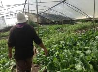 Don JJ nos muestra su preciosa huerta orgánica en la finca La Herencita ubicada en Zarcero. Fuente: 3Colibrís.
