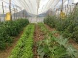 La implementación de invernaderos facilita la producción en la Finca La Subversiva, ubicada a 15 minutos de la costa atlántica del territorio tico. Fuente: 3Colibrís.