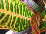 La amazonía, rica en texturas, colores y sabores. Fuente: 3Colibrís.