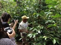 Don Mesías nos muestra cómo en su finca en La Florida, Nariño asocia el café con cítricos. Fuente: 3Colibrís.